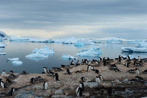 Penguin, Island, Blue, Animal, Antarctica, Bluish