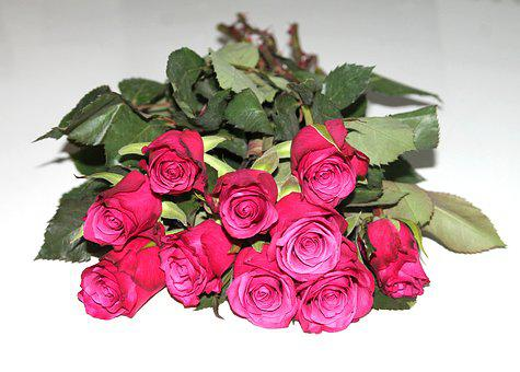 Many Roses, Roses, Bouquet, Flowers, Romance, Red