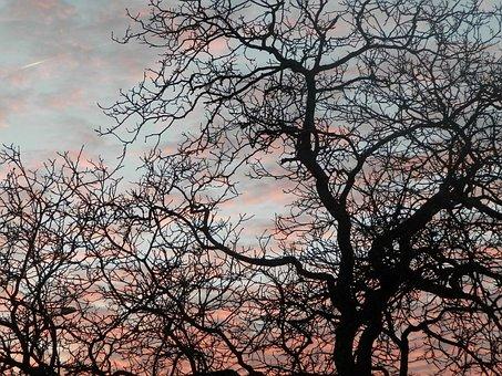 Tree, Sky, Night, Sunset, Pink, Branch, Common Walnut