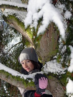 Winter, Snow, Nature, Shrub, Fir, Forest, France, White