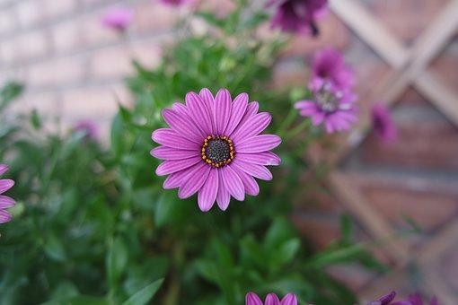 Flower, Flowers, Nature, Garden, Small Flower
