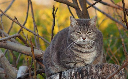 Cat, Grey, Domestic Animal, Fur, Fat, Autddors