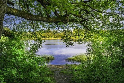 Lake, Forest, Nature, Bush, Wilderness, Green, Treetop