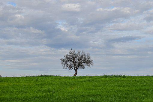 Tree, Alone, Loneliness, Meadow, Landscape, Nature, Sky