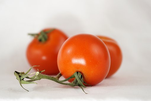 Tomatoes, Bush Tomatoes, On The Vine