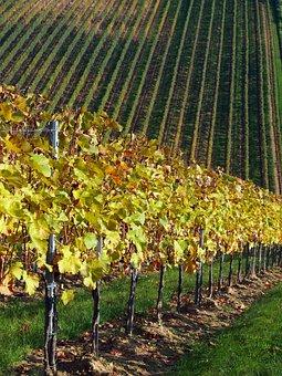 Grape, Devil's Ditch, Plantation, Green, Road, Villány