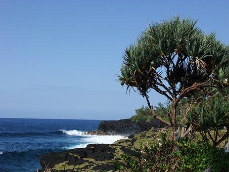 Reunion Island, Pandanus, Vacoa, Indian Ocean, Shore