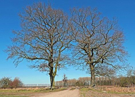 Oak, Solitaire, Wintry, Flat Land, Münsterland