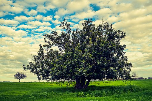 Tree, Meadow, Landscape, Nature, Sky, Clouds, Green