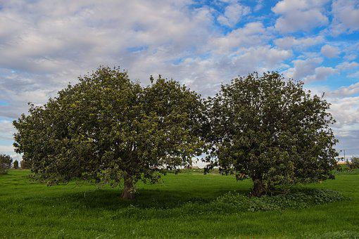 Trees, Meadow, Landscape, Nature, Sky, Clouds, Green