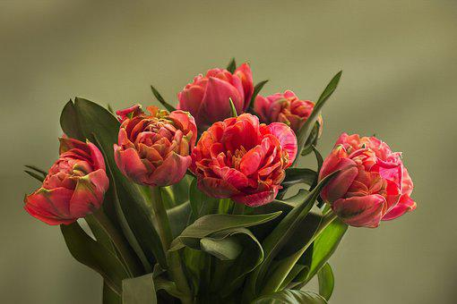 Nature, Flowers, Tulip Bouquet, Tulips, Filled Tulips