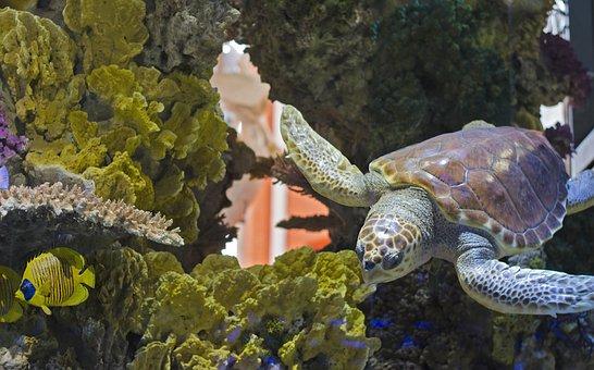 Turtle, Turtle Pool, Aquarium, Maritime Museum