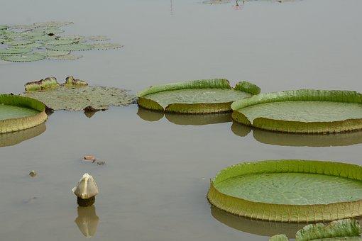 Wanglian, Green, Nansha