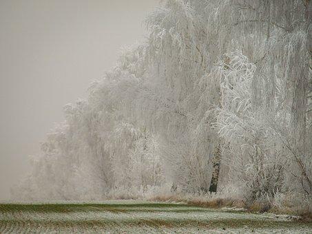 Winter, Snow, Wintry, Landscape, Nature, Winter Dream
