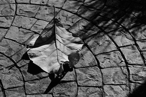 Winter, Leaf, Shadows, Leaves, Nature, Season, Autumn