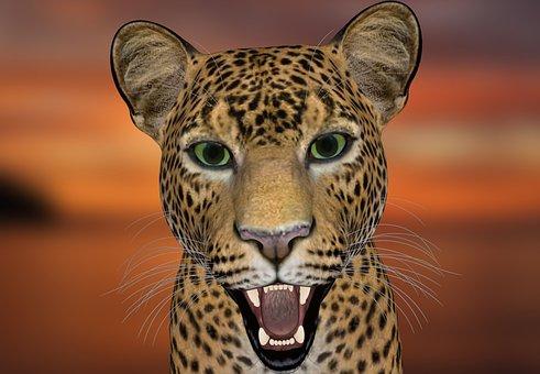 Leopard, Leopard-head, Animal World, Big Cat, Predator