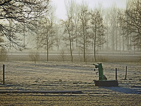 Pasture, Arable, Hoarfrost, Frozen, Trees, Morning