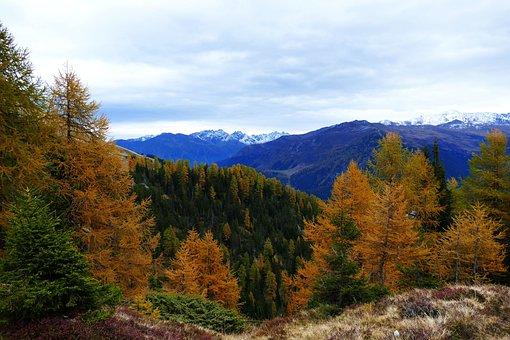 Autumn, Larch, Davos, Mountains, Fall Color
