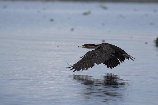 Kenya, Bird, Lake, Hunter Of Images, Animal, Water
