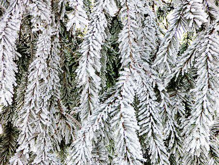 Winter, Bough, Rime, Forest, Holidays, Wood, Branch