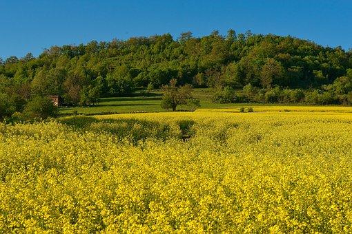 Rape Seed, Landscape, Canola, Agriculture, Environment