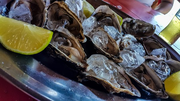 Oyster, Food, Macro, Power Supply, Gastronomy