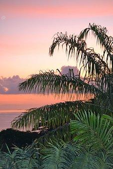 Mahe, Sunset, Seychelles, Sky, Palms, Idyllic, Peaceful