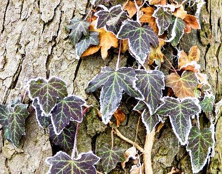 Nature, Holidays, Winter, Rime, Plant, Grain, Foliage