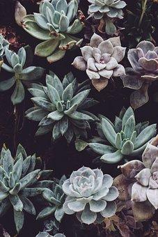 Plants, Petals, Leaves, Succulent, Green Wall, Pastel