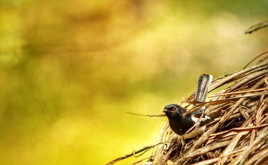 Robin, Sparrow, Bokah, Bird, Nature, Animal, Wildlife
