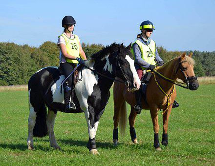 Horse, Riding, Equestrian, Horseback, Outdoors, Summer