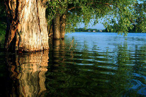 Water, Reflection In The Water, River, Forest, Summer