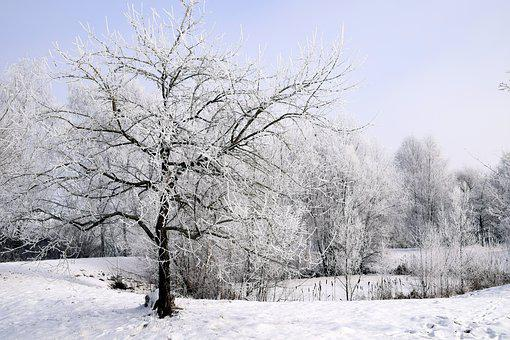 Winter, Snow, Wintry, Tree, Cold, White, Snowy
