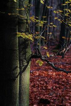 Autumn, Tree, Beech, Leaves, Forest, Colorful
