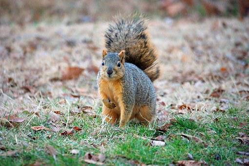 Squirrel, Outdoor, Leaves, Ground-squirrel, Pets, Baby