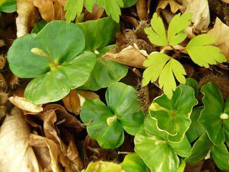 Beech, Book, Seedlings, Shoots, Children, Beech Leaves
