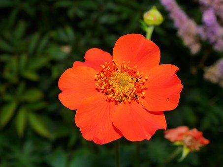 Flower, Blossom, Bloom, Wild Strawberries, Plant