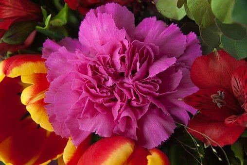 Flowers, Carnation, Tulip, Bouquet