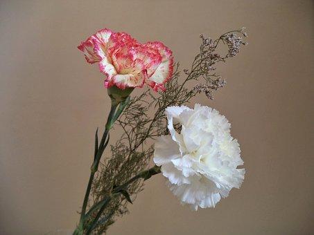 Carnations, Flowers, Bouquet, Decoration