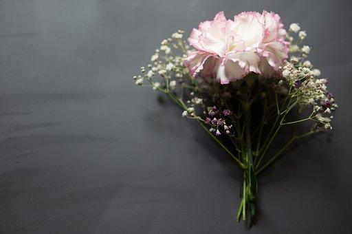Flowers, Chalkboard, Baby's Breath, Carnation