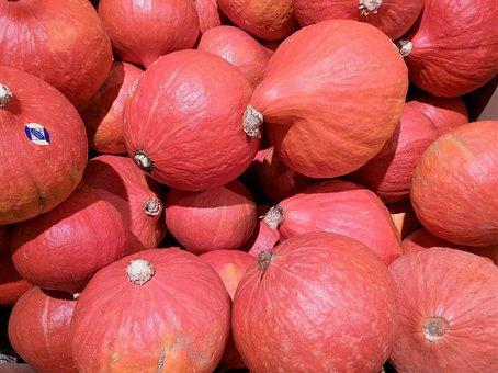 Pumpkin, Autumn, Decorative Squashes, Gourd, Halloween
