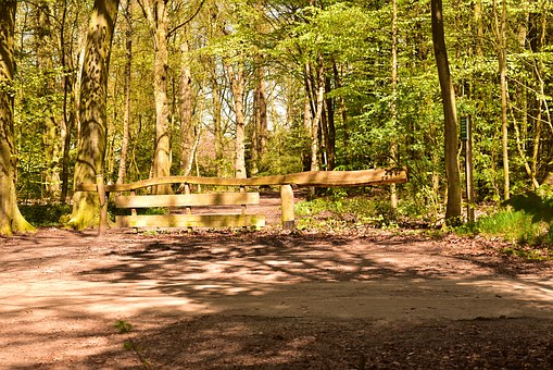 Wooden Gate, Goal, Forest, Forest Path, Away, End