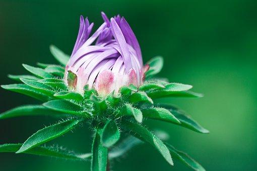 Flower, Violet, Violet Flower, Blossom, Bloom