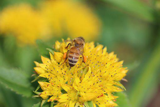 Nectar, Bee, Flower, Spring, Summer, Plant