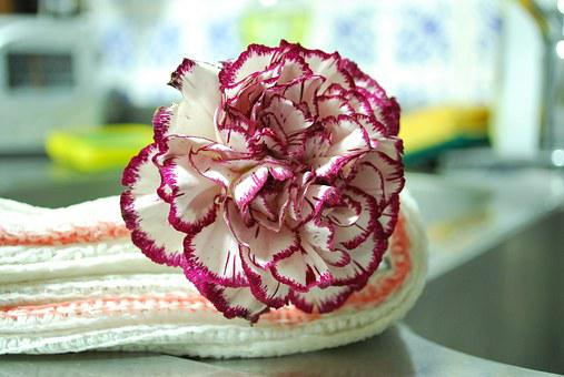 Carnation, Flower, Flowers, White, Flowery