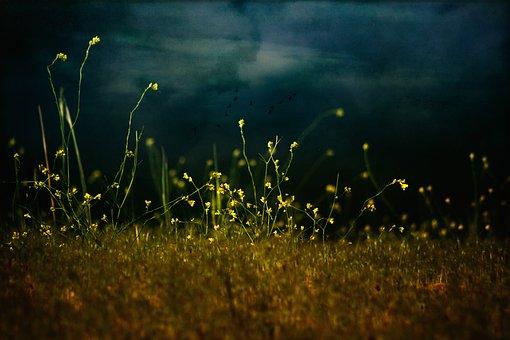 Flower, Spring, Landscape, Spring Flower, Nature, Green