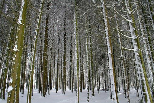 Winter, Forest, Snow, Frost, Cold, Trees, Log, Bark
