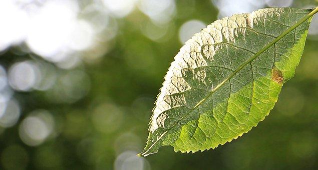 Leaf, Tree Leaf, Green Leaf, Autumn, Mood, Leaves