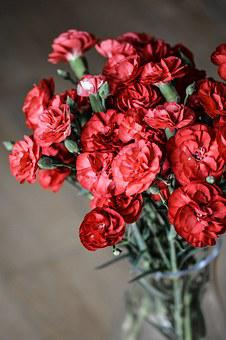 Carnation, Flowers, Red, Nature, Bloom, Bouquet, Smooth