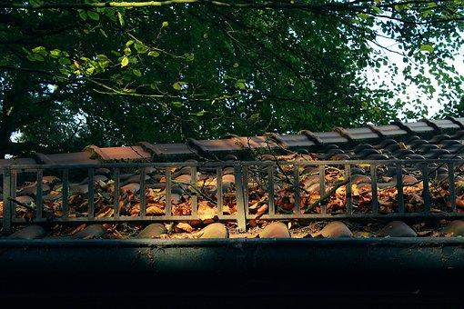 Roof, Tree, Sun, Sunshine, Light, Incidence Of Light